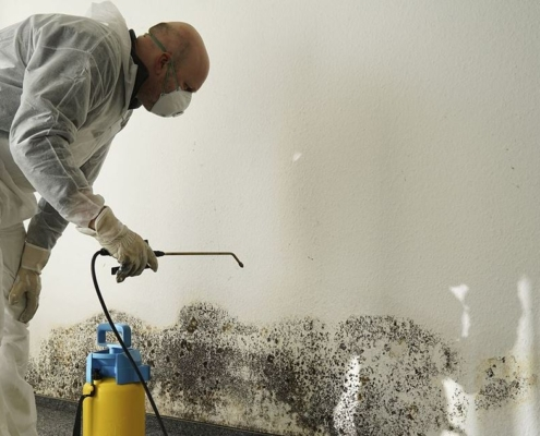 How Much Does Mold Remediation Cost