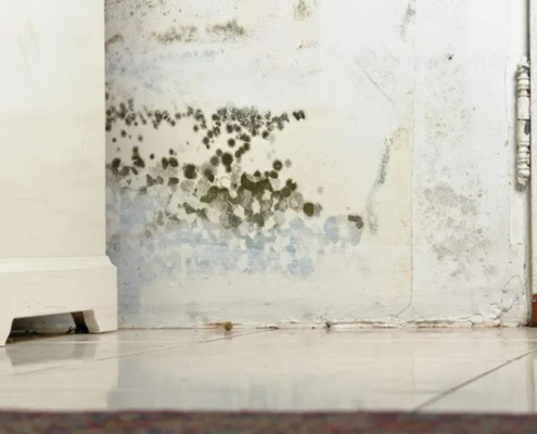Prevent and Stop Mold Growth