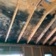 Black Mold Restoration